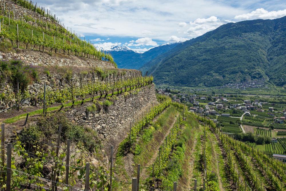 Livigno wine tour 2020 pacchetti