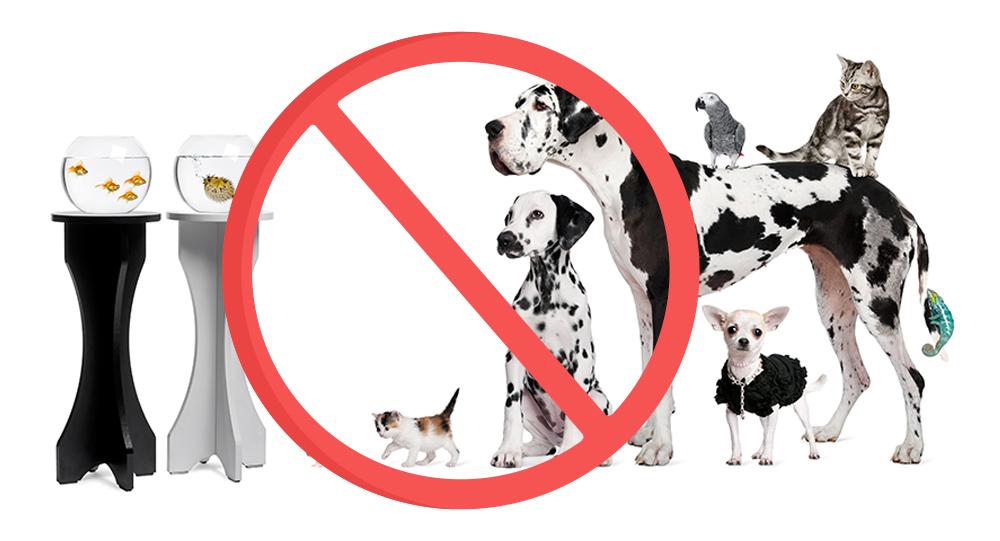 Animali non ammessi